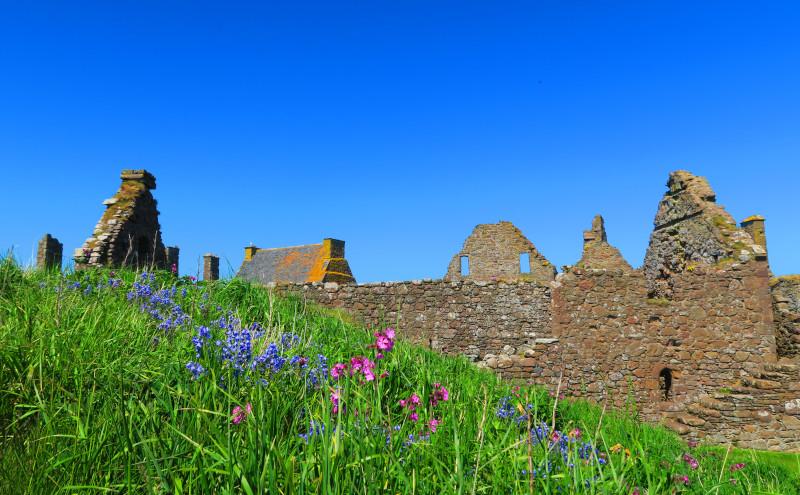 Reste einer Burg aus der Froschperspektive hinter einer blühenden Wiese